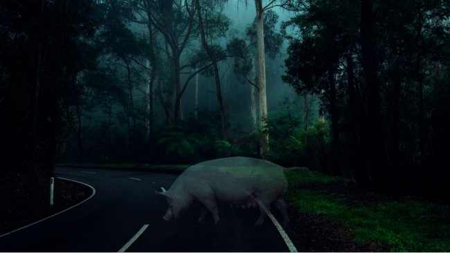 Porcas fantasma