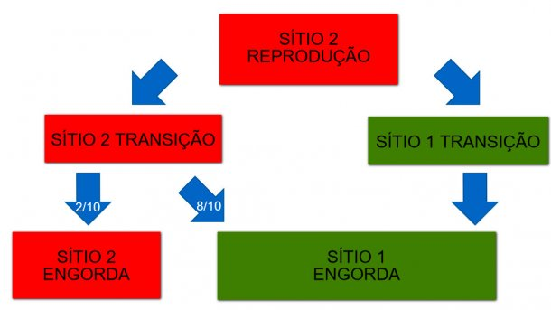 Figura 1: Esquema dos doIs sitios de produção e do fluxo de animais.