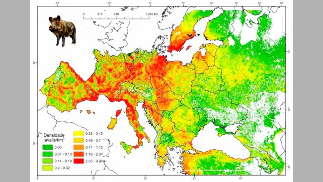 Figura 2: População modelada de javalina Europa. Fonte: FAO-ASFORCE, Maio 2015