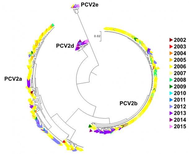 Figura 2. Árvore filogenéticade máxima verossemelhança. As 729 sequências ORF2 da base de dados UMV-VDL PCV2 comcódigo de cor segundo o ano. Foram observados os genótipos.