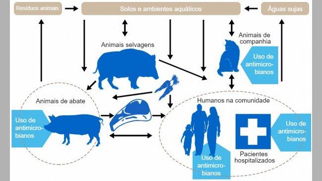 Fluxo de determinantes de resistência a antibióticos entre os diferentes reservatórios. Emazul indicam-se os pontos onde se administramantibióticos. http://www.effort-against-amr.eu/