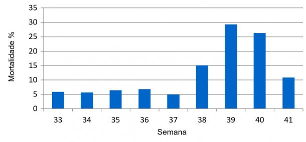 Gráfico 1. Percentagem de mortalidade semanal pré-desmame, prévio e durante o quadro sanitário de DES.