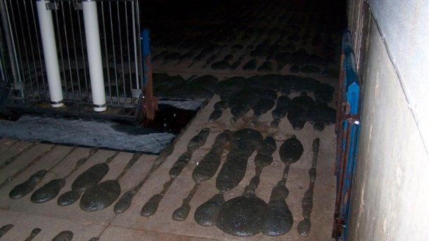 Foto 2: Formação de espuma na vala de efluente