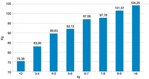 Figura 3. Distribuiçãodos animais emfunçãodopeso (kg) aos 159 dias. Os 6 kg de diferença entre os5% de porcos commenos peso eos5% commaiorpeso que se detetaramaodesmame(figura 2) converteram-se em30 kg.