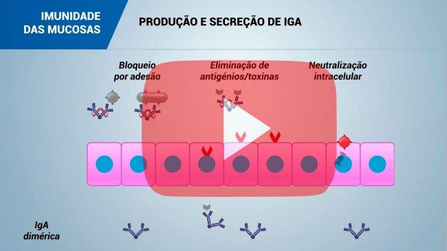 Imunidade das mucosas
