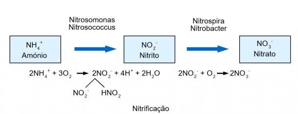 Nitrificação