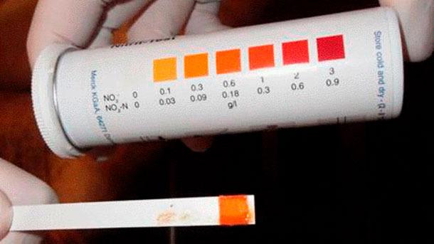 Figura 5: Tira para detecção de nitritos indicando envenenamento por nitritos..