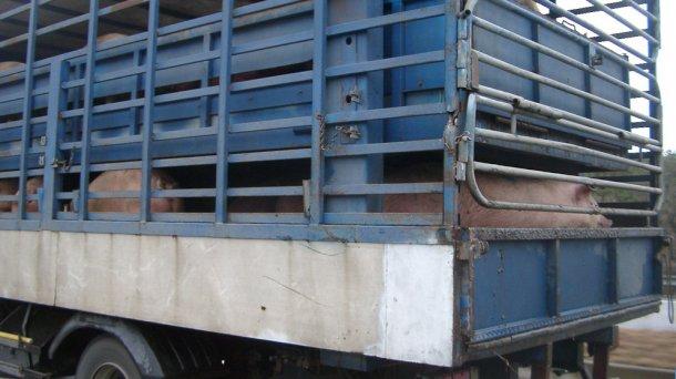 Há que assegurar a entrada de porcas de reposição em número suficiente.