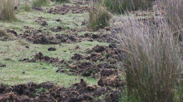 Foto 1: Indicação da presença de javalis. É preferível instalar novas explorações suínas longe de zonas florestais ou ribeiras, assim como de milheirais e regadios