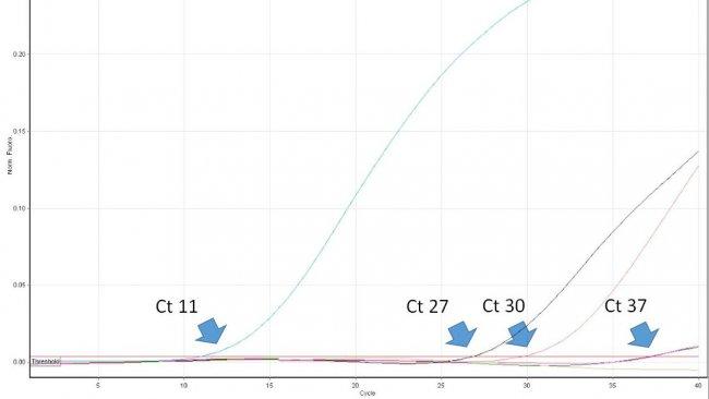 Figura 1. El ciclo de umbral (Ct) es el primer número del ciclo de una PCR en tiempo real en el que se detecta la fluorescencia que indica la presencia del patógeno buscado en la muestra. Cuanto menor sea el valor de Ct, mayor será la cantidad de patógeno en la muestra analizada. Los valores de Ct muy altos deben interpretarse con cuidado, ya que pueden originarse a partir de la degradación espontánea de una sonda TaqMan en los últimos ciclos, a pesar de la falta del ADN diana en la muestra.