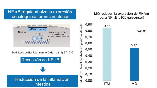 Figura 2. A redução do fator nuclear NF-κB reduz a inflamaçãointestinal.