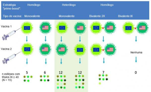 """Figura 2. Efeito dos protocolos vacinais tradicionais e da """"vacinação de rappel heteróloga"""" na amplitude da resposta de anticorpos anti-H3N2. As bandeiras indicam as estirpes europeias e norte-americanas do VGS H3N2. O soro recolhido aos 14 dias após a segunda vacinação foi analisado para 15 vírus antigenicamente diferentes incluindo as estirpes vacinais. Os números representam o número de vírus para os quais os títulos de anticorpos HI foram ≥ 40."""