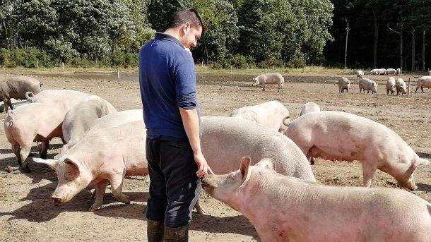 La relación que se desarrolla entre animal y persona es completamente distinta.
