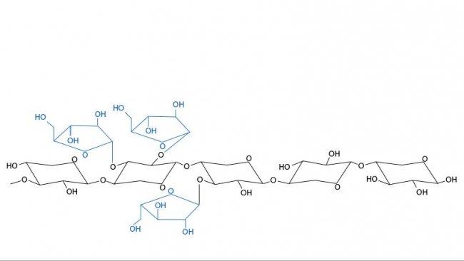 Figura 3. Estrutura química dos arabinoxilanos. As ramificações da arabinose e sua distribuição variam entre cereais e entre variedades do mesmo cereal.