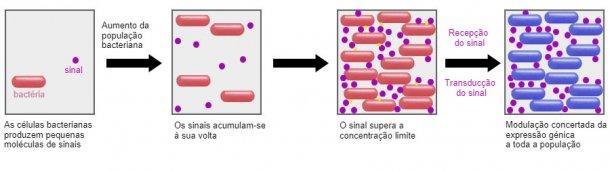 Um sistema promissor é a capacidade de influenciar o mecanismo de sinalização entre bactérias (Quorum sensing) através de certos probióticos. Desta forma, eles podem ser impedidos de realizar estratégias de sobrevivência comuns, como a formação de biofilmes ou esporulação em condições adversas.