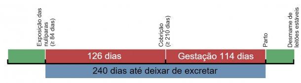 Figura 1. Linha temporal de exposição das porcas de substituição.