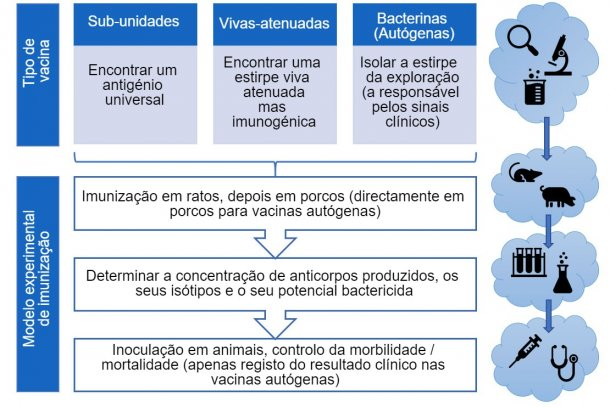 Figura 3. Passos na análise da eficácia das vacinas experimentais (por tipo de vacina).
