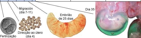 20110630_gestacion2