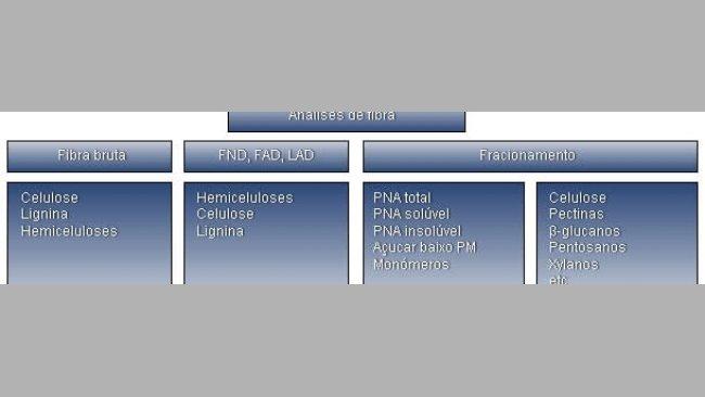 Resumo das diferentes técnicas analíticas e fracções da fibra