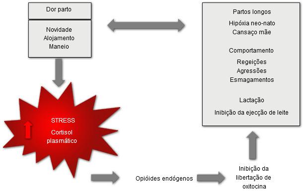Estrés y dolor provocados por el parto