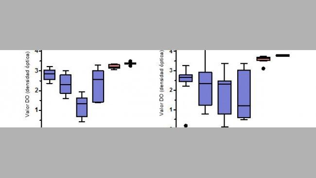 Niveles de anticuerpos IgG específicos para PCV2 medidos mediante ELISA en suero y calostro de cerdas