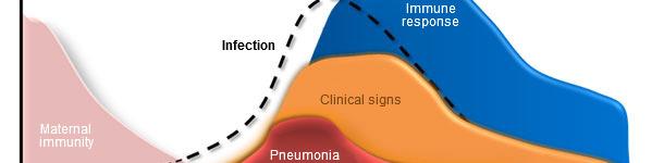 Dinámica de infección de Mycoplasma hyopneumoniae, signos clínicos y respuesta del hospedador.