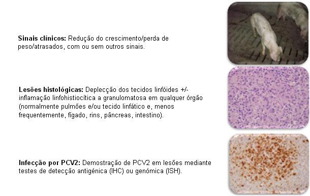 PMWS: definición clínica