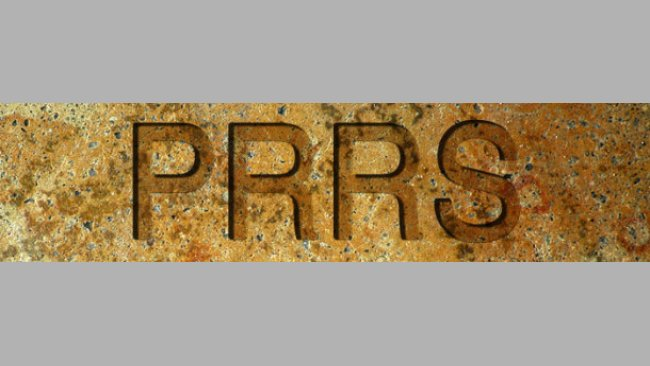 PRRS