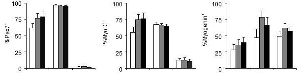 Efeito do fósforo da dieta sobre os genes que regulam a proliferação (Pax7) e a diferenciação (MyoD, Myogenin) das células satélite
