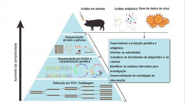 Método sistemático de vigilancia del virus de la influenza A en porcino