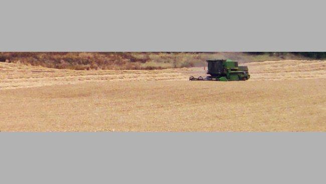 Buena cosecha de cereales
